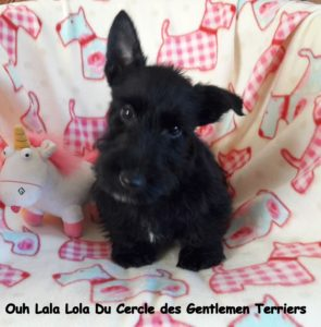 10 semaines. Lola est partie vivre à Lyon.