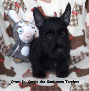 Orson est parti vivre dans le Gard.